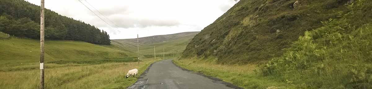 Schottland-Sehenswuerdigkeit-Moorfoothills-mit-Schafen-schottland-reisebericht